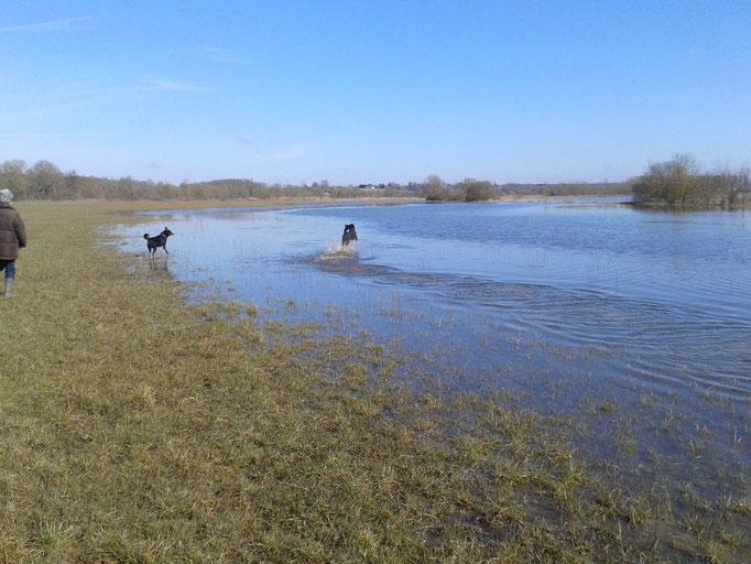 In der Winterzeit sind die Felder an der Seille häufig überflutet - zum Gaudi der Hunde