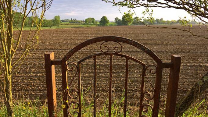 Blick über das Feld vom Bio-Geflügelbauern