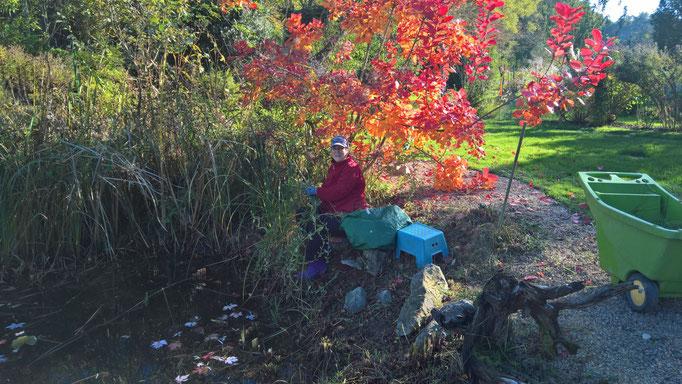 Farbenfroher Herbstschnitt