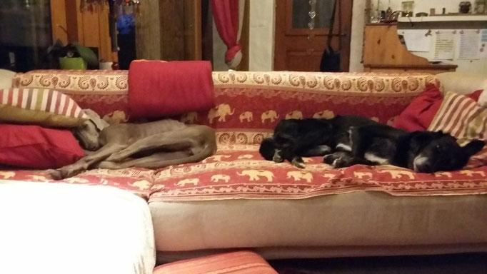 Luke und Faya teilen sich das Sofa