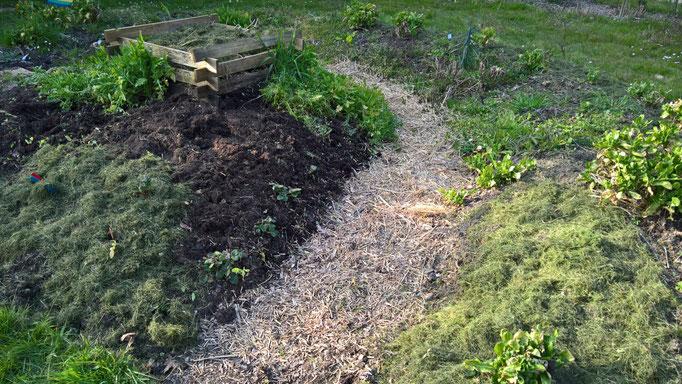 Das Gemüse-Hügelbeet wird gejätet und der Weg mit Häcksel gefüllt