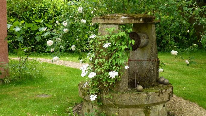 Die weisse Rose am Ziehbrunnen