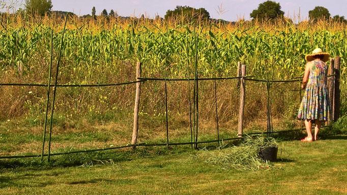 Doro dekoriert den Zaun ganz speziell