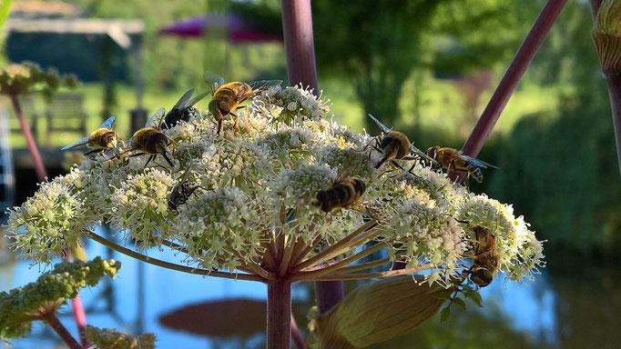 Die Bienen tummeln sich auf den wild wachsenden Blumen um den Teich