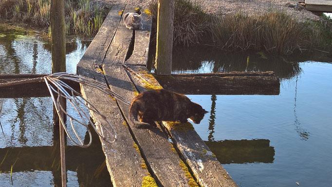 Grizzly und Sanssouci auf der alten Brücke