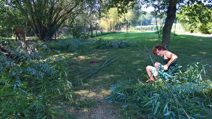 Viel Bambus geschnitten für die Verstärkung des Schafzauns
