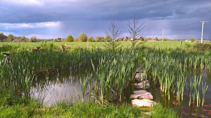 Gewitterstimmung über dem kleinen Teich ...