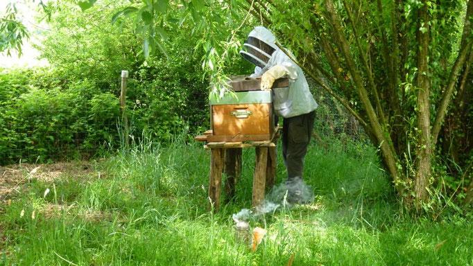 """Gérald kommt seine Bienen, die bei mir sind, """"pflegen"""""""