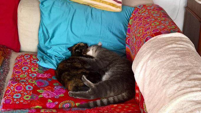 Grizzly und seine Schwester Sanssouci