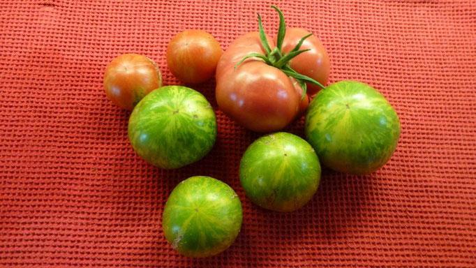 Die ersten bunten Tomaten aus dem Hügelbeet