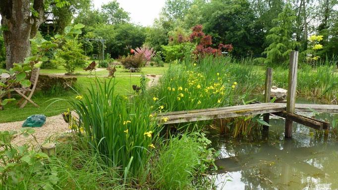Blühende Sumpfiris