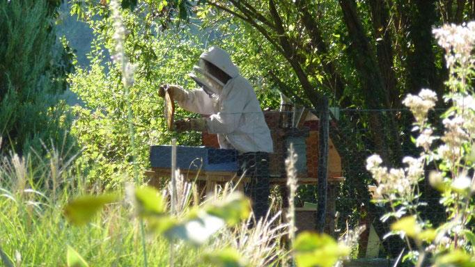 Gérald, der Imker, holt den Honig aus den Bienenstöcken