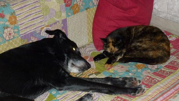 Luke und Sanssouci teilen sich gerne das Sofa