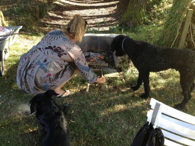 Auch die Hunde finden das spannend