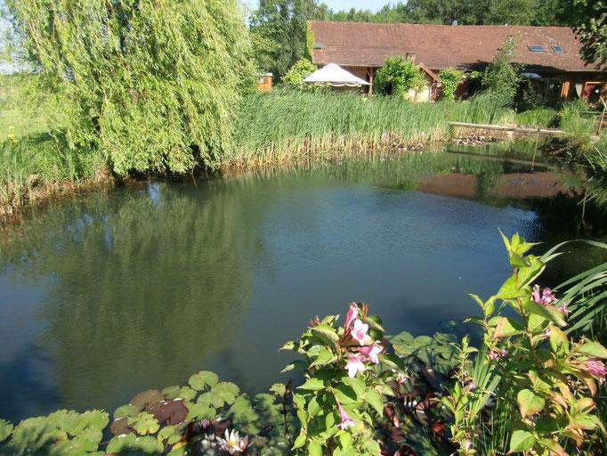 Tiefer Wasserstand bei aussordentlicher Trockenheit