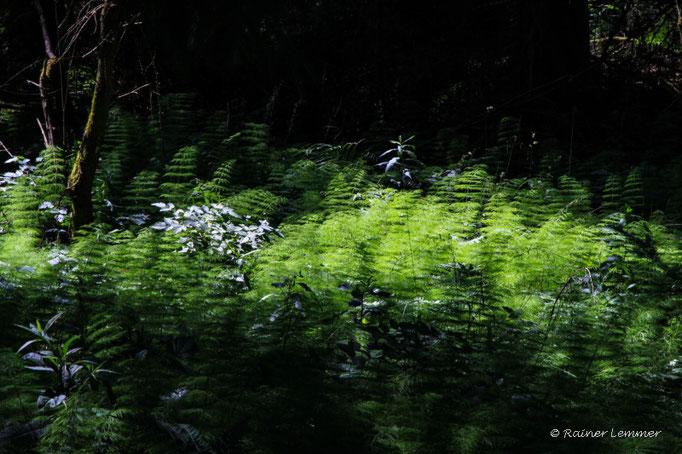 Schachtelhalm Wälder an der WW-Seenplatte