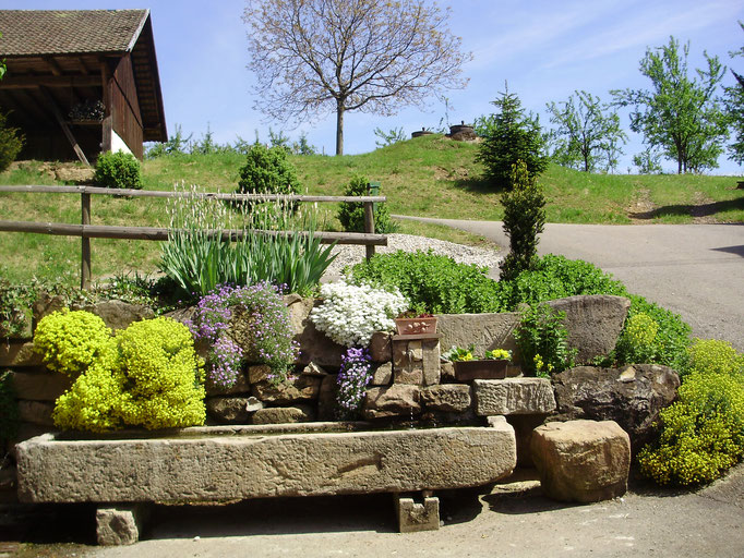 Frühling beim Brunnentrog