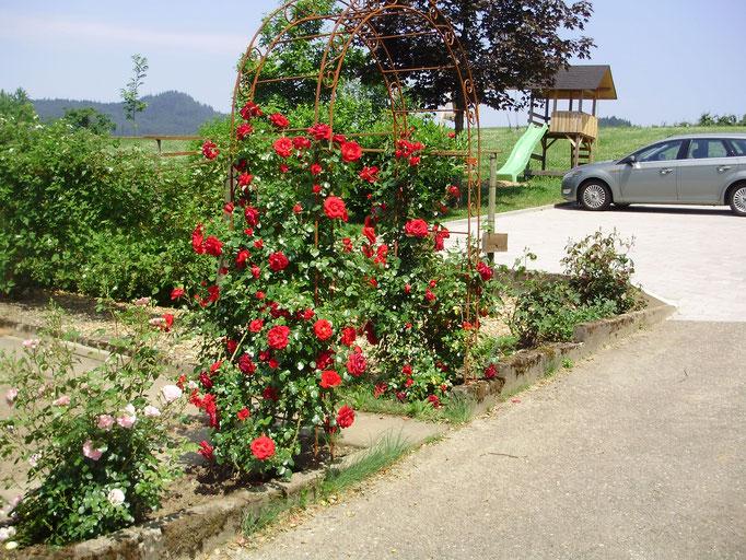 Garten und Parkplatz neben dem Haus