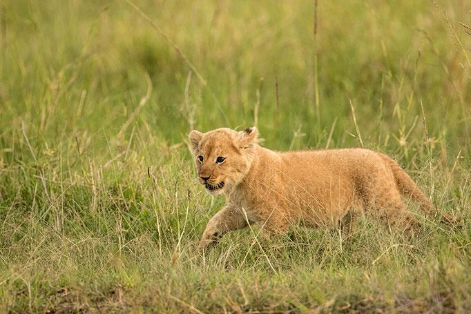 Maasai Mara: Jeune aventurier