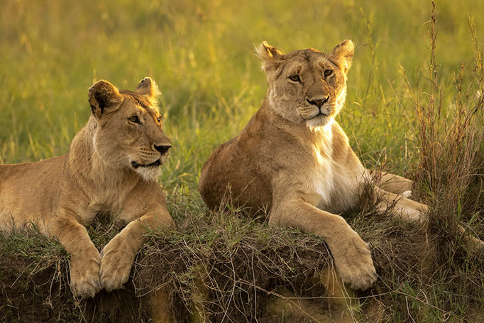 Maasai Mara: Les 2 copines