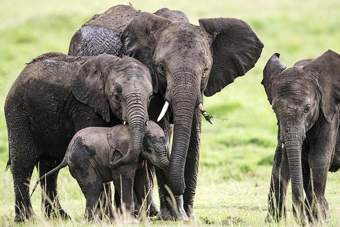 Maasai Mara: toujours protéger le plus petit