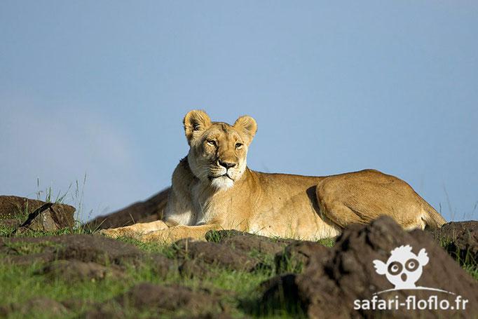 Lionne de Paradise Plain