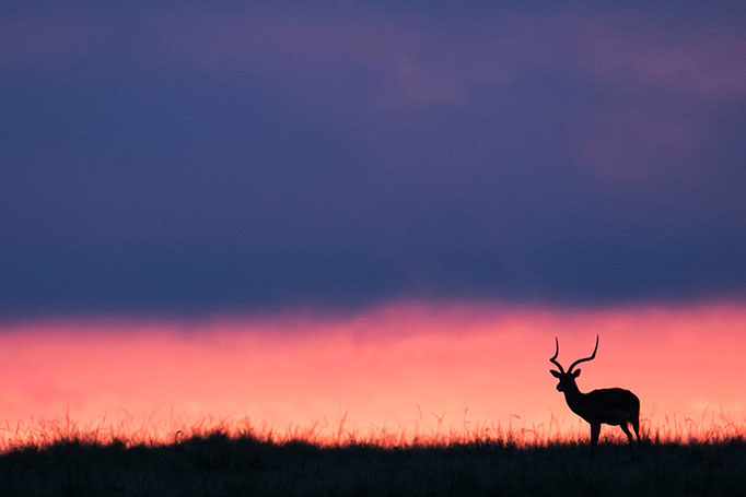 Maasai Mara: Lever de soleil
