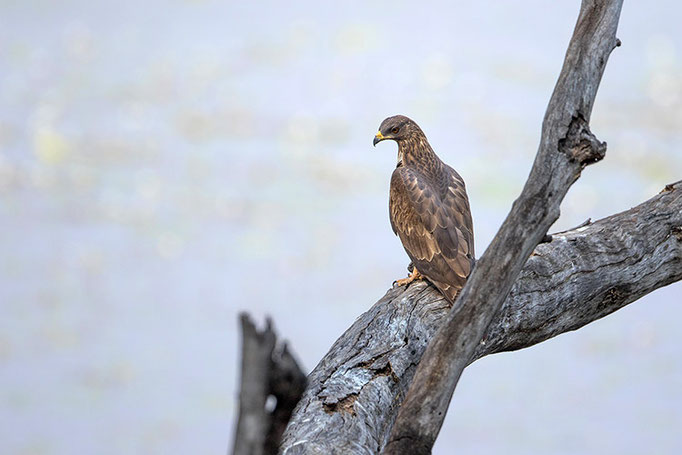 A identifier - Tadoba Andhari Tiger Reserve