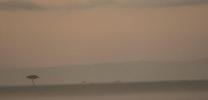 Maasai Mara: Lever de soleil dans la brume