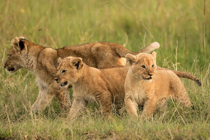 Maasai Mara: Age tendre