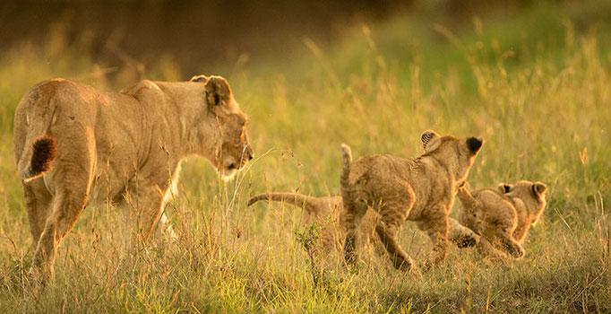 Maasai Mara: de bonnes mères