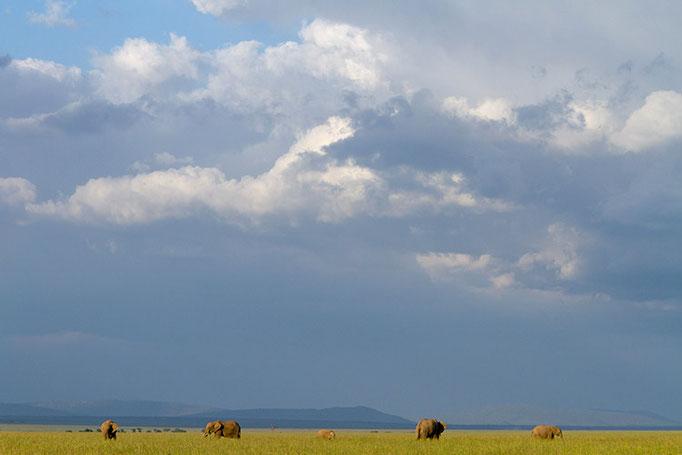 Maasai Mara: Ambiance