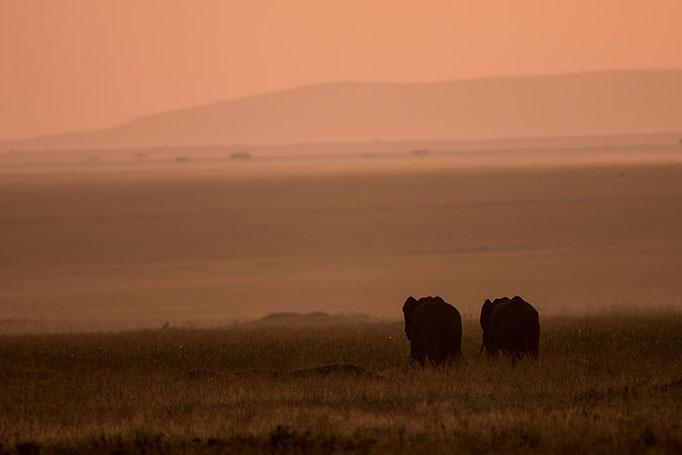 Maasai Mara: Lever de soleil romantique