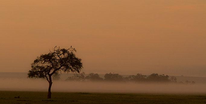 Maasai Mara: Aube brumeuse