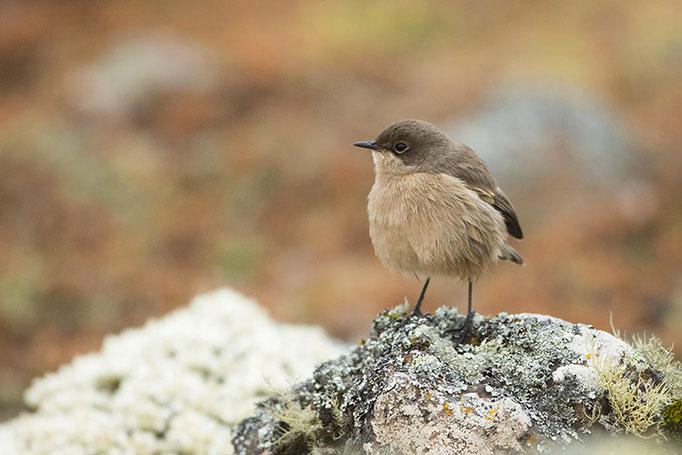 Balé Mountain National Park - A identifi