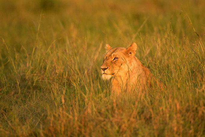 Maasai Mara: regard
