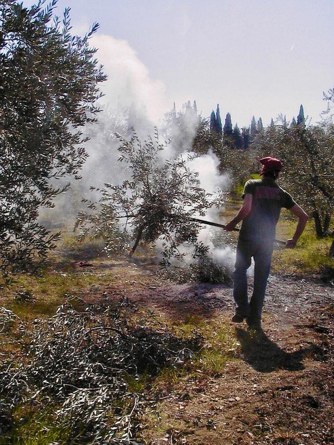 pruning burning, Agriturismo, Casafredda, Arezzo, Tuscany, Toscana