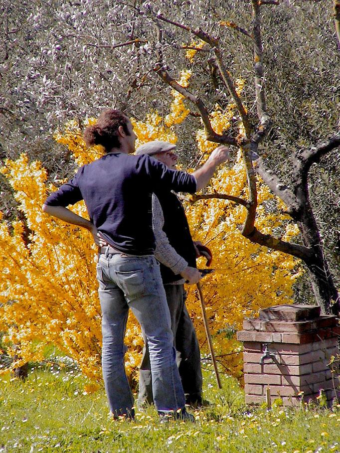 wise tips, Agriturismo, Casafredda, Arezzo, Tuscany, Toscana