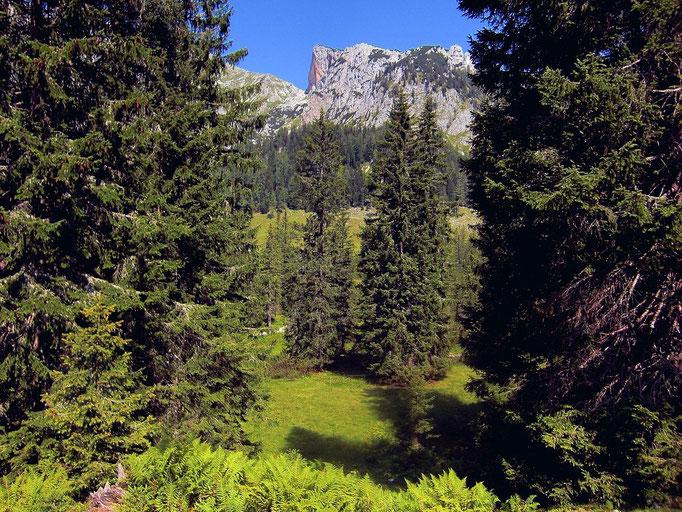 Rotwand hinter dem teilweise bewaldeten Moorgebiet
