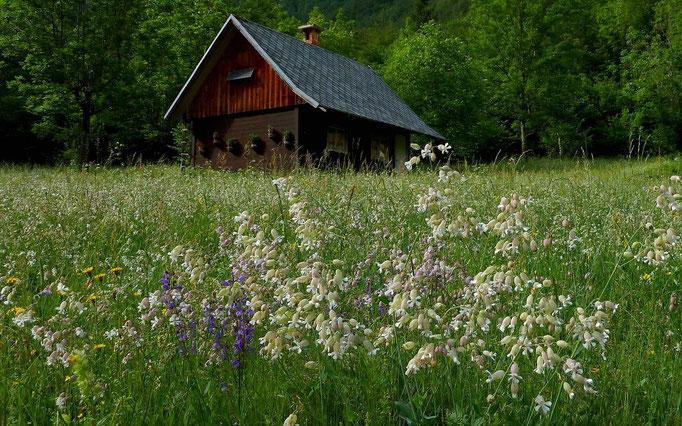 Hütte im Vojetal