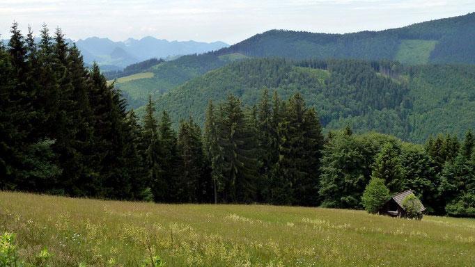 Der bis 1000 m hohe bewaldete Spadenberg und links die Berge bei Laussa und Ternberg