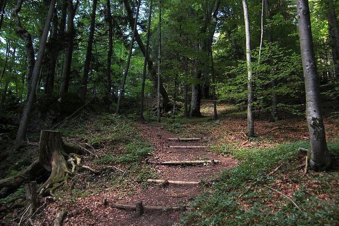Steilerer Schlussaufstieg auf den Hieselberg im Mischwald