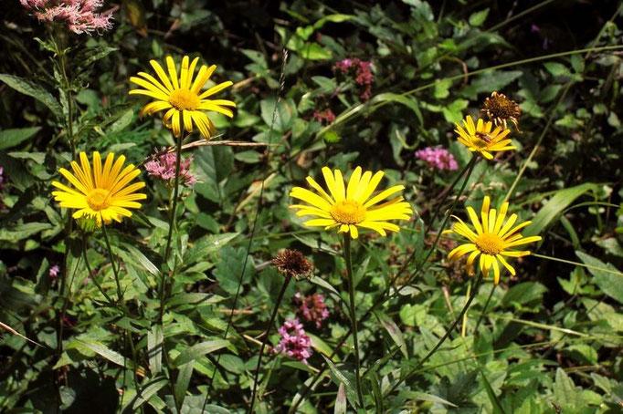 Gelbe Blumen am Wegrand