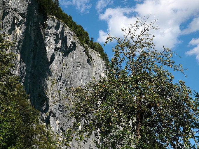 Die Gößler Wand vom Wanderweg Grundlsee - Kammesee