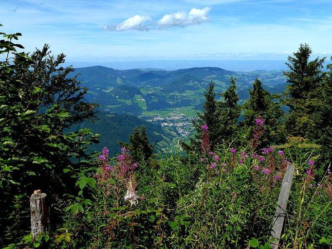 Blick vom Gipfel nach Großraming und auf das Alpenvorland hinaus.