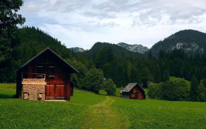 Wanderweg durch Almwiesen