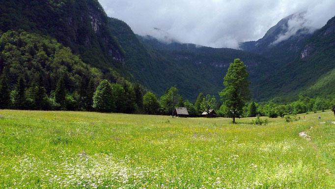 Almwiesen und Talhintergrund im Vojetal