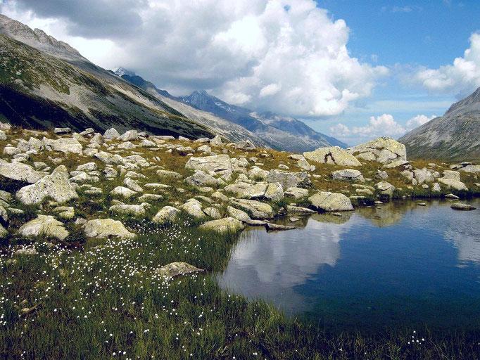 Kleiner  See mit Wollgräsern auf dem Jochschinder genannten Steig zum Pfitscher Joch