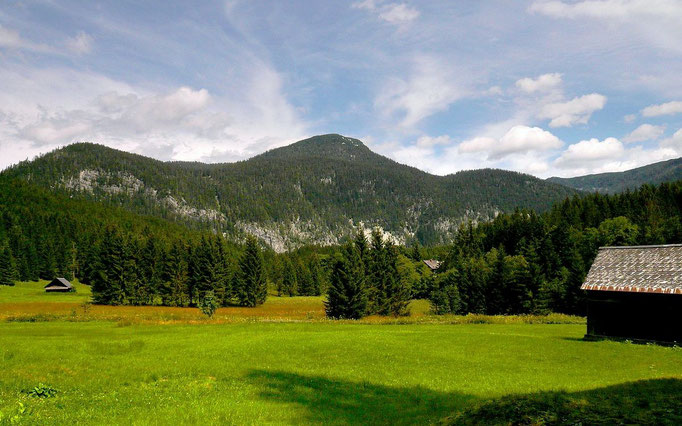 Almwiesengelände vom Wanderweg