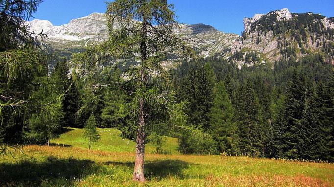Nadelwaldbestände im Teichelboden